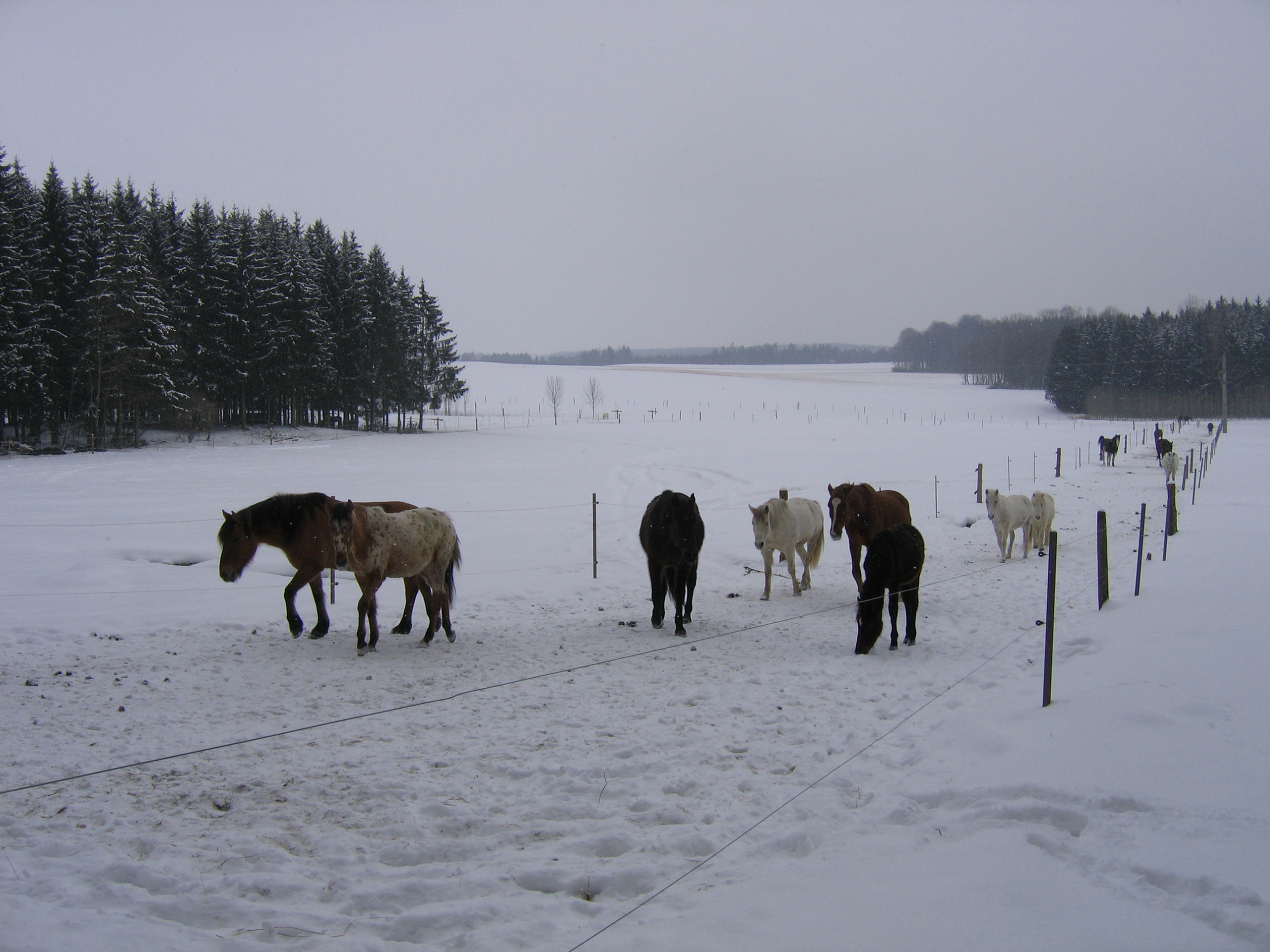 Ponyhof_Eberhart_Ebersbach_Unser_Hof_Slider_2