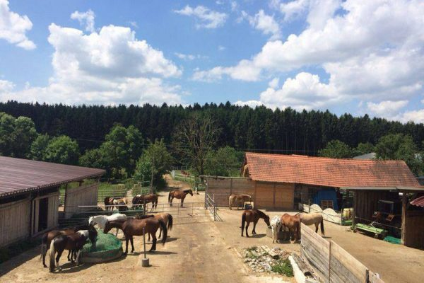 Ponyhof_Eberhart_Ebersbach_Unsere_Pferde_im_Stall
